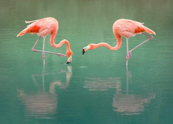 pink flamingo art
